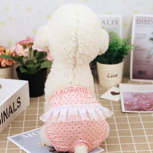 寵物狗狗生理褲可愛裙擺安全褲泰迪衛生巾小型犬生理褲小狗安全褲快速出貨