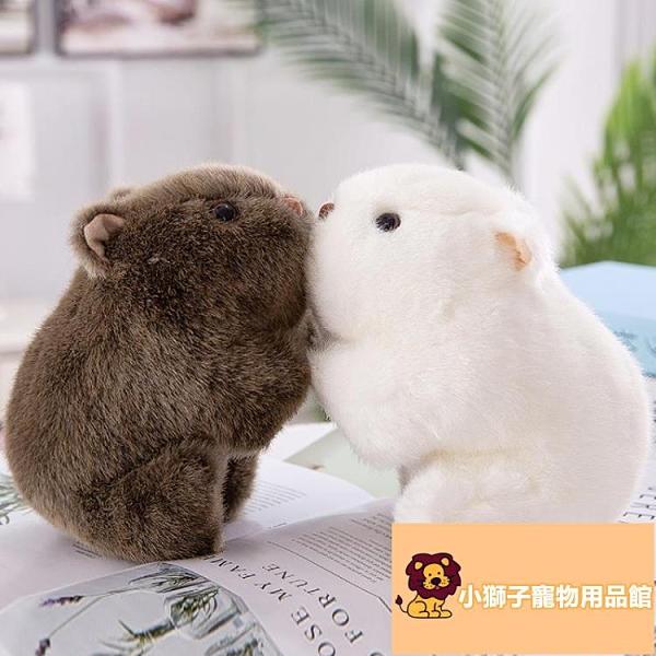 小寵物可愛公仔毛絨玩具胖豚鼠抓機布娃娃迷你玩偶【小獅子】