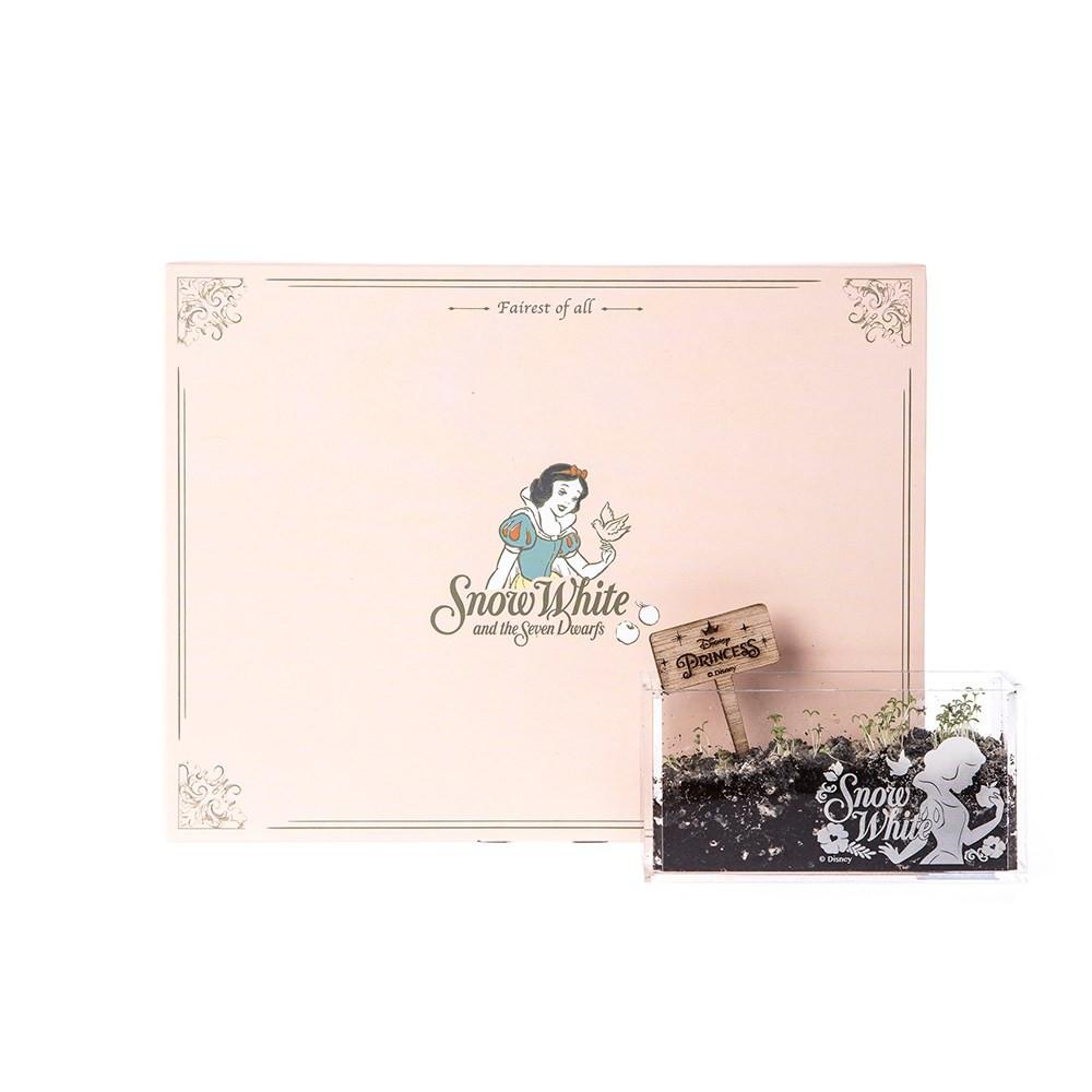 HOLA 迪士尼系列公主個人植栽–白雪公主(洋甘菊)