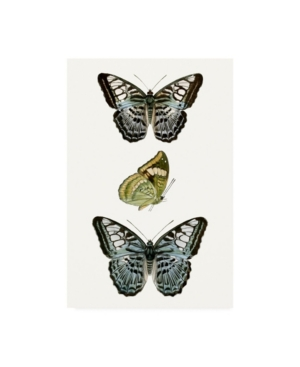 "Vision Studio Butterfly Specimen I Canvas Art - 27"" x 33.5"""