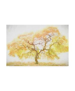 "Ph Burchett Golden Tree Yellow Canvas Art - 15.5"" x 21"""