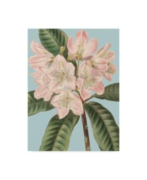 """Vision Studio Fresh Florals Ii Canvas Art - 20"""" x 25"""""""
