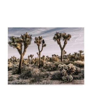 "Rachel Perry Views of Joshua Tree Ix Canvas Art - 15"" x 20"""
