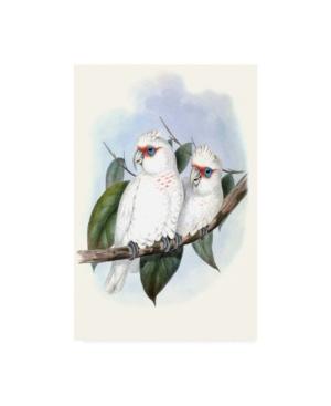 "John Gould Pastel Parrots Iv Canvas Art - 37"" x 49"""
