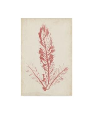 "Henry Bradbury Coral Sea Feather I Canvas Art - 20"" x 25"""