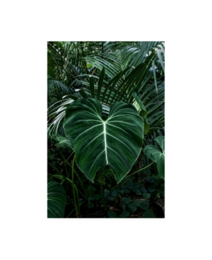 "PhotoINC Studio Tropical 3 Canvas Art - 36.5"" x 48"""