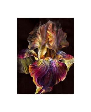 "PhotoINC Studio Iris on Black Canvas Art - 15.5"" x 21"""