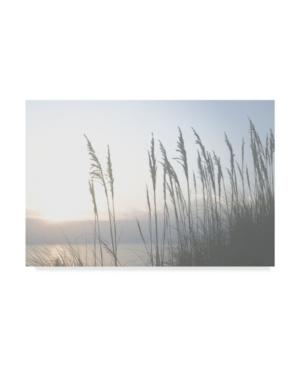 """Sharon Chandler Morning Whisper Ii Canvas Art - 37"""" x 49"""""""