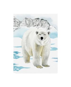 "Grace Popp Arctic Animal Ii Canvas Art - 20"" x 25"""