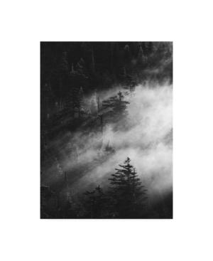 """Design Fabrikken Misty Pine Woods Fabrikken Canvas Art - 27"""" x 33.5"""""""