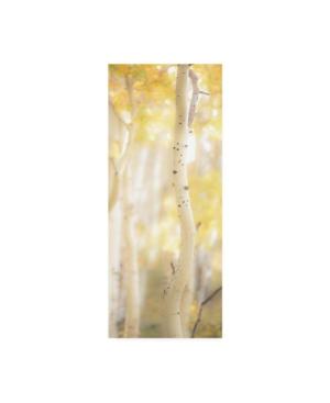 """Dan Ballard Yellow Birch 3 Canvas Art - 15.5"""" x 21"""""""
