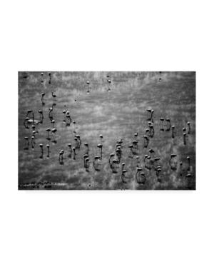 "Claudia Maia Quavers of Nature Canvas Art - 20"" x 25"""