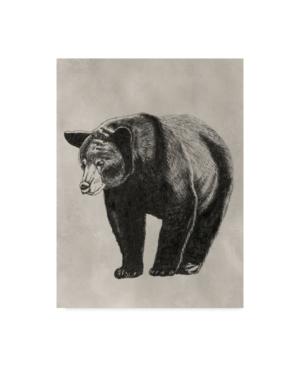 """Naomi Mccavitt Pen and Ink Bear Ii Canvas Art - 15"""" x 20"""""""