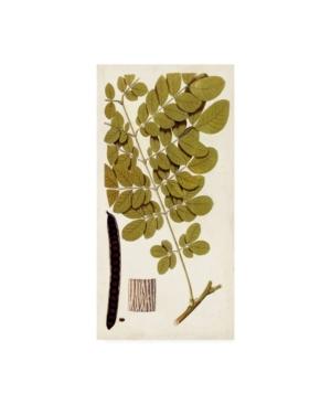"""Vision Studio Leaf Varieties I Canvas Art - 20"""" x 25"""""""