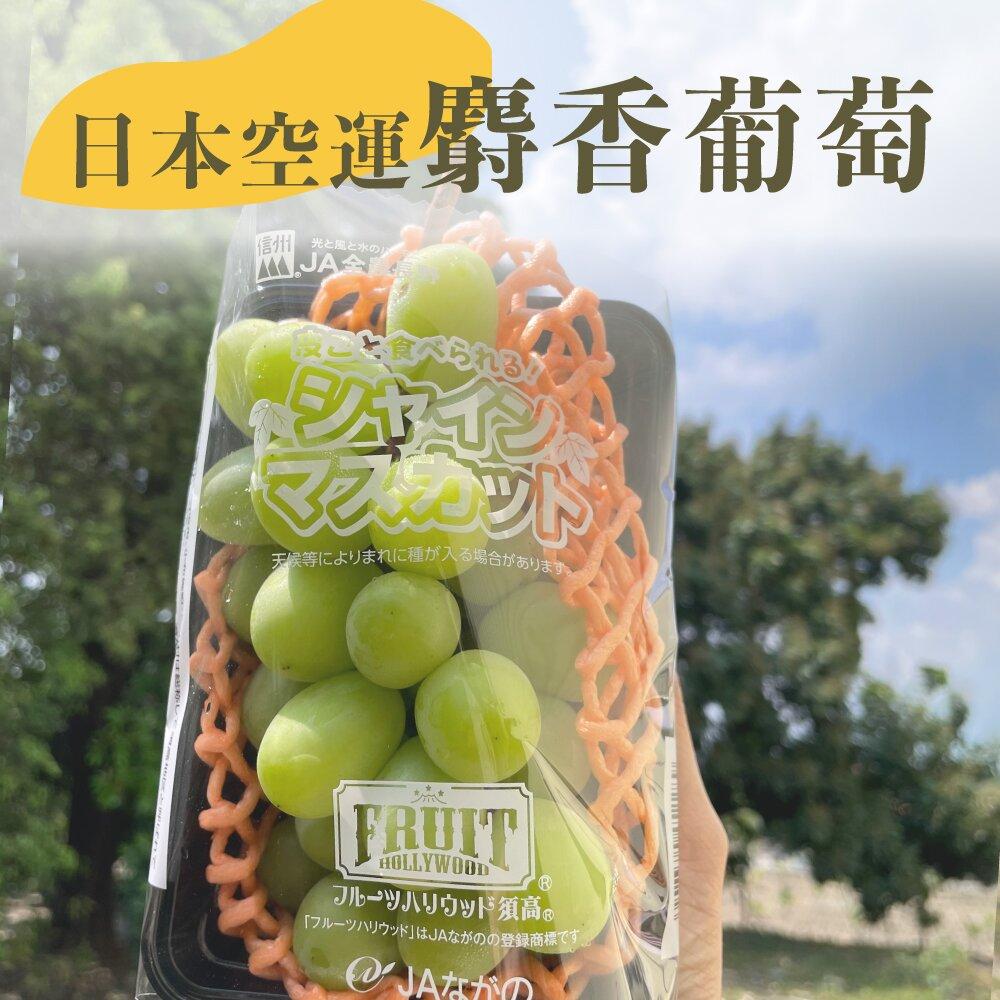 水果狼- 頂級日本空運長野県麝香葡萄 單串禮盒 (320-380g) 免運 水果禮盒