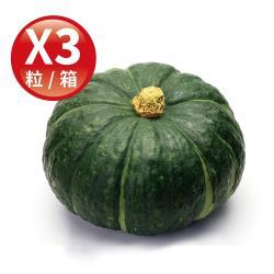 Global Fresh-力信國際 鬆綿清甜日本種栗子南瓜 (800g/粒,3粒/箱)