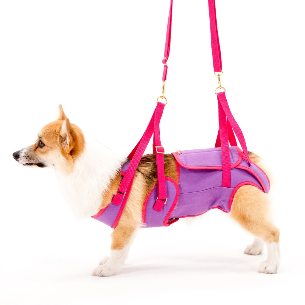 LaLaWalk 中型步行輔助帶-紫/桃紅老犬用品/輔助用品/脊椎/科基/輔助衣/復健