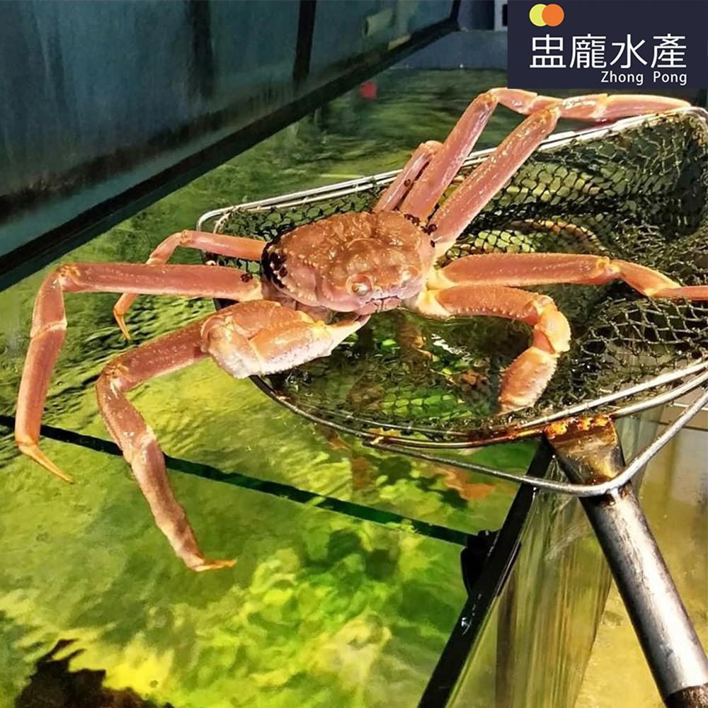 【盅龐水產】活體松葉蟹(不定重)(需實際秤重報價)