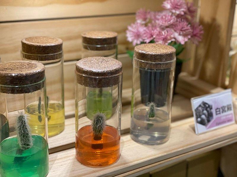多肉植物 白宮殿 自然風4號瓶 懶人盆栽 室內植物 辦公室療癒小物