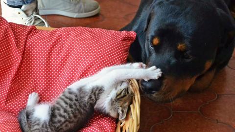 Gestione del cane e memorie razza- NeroFocato (parte 3 di 4)