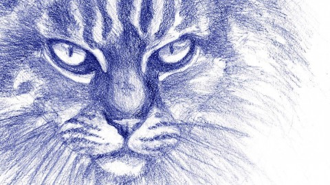 Drawing Animals: From Anatomy to Rendering