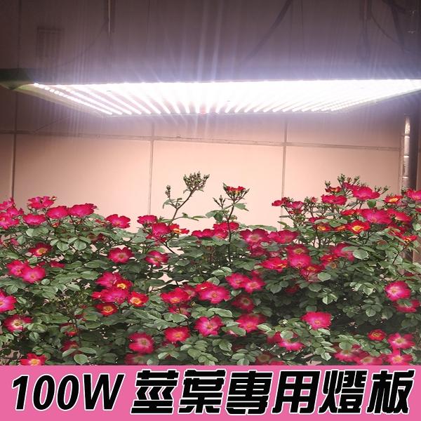 薄型植物燈 100瓦 莖葉加強光譜 植物種植箱燈版 植物燈光源模組 植物生長燈版