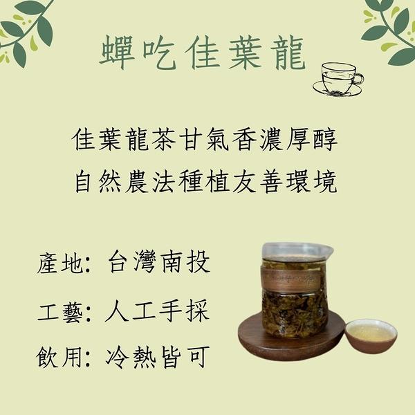 蟬吃茶佳葉龍茶包10包裝 GABA茶 低咖啡因 γ- 胺基丁酸 順口茶 元氣十足 幫助入睡 無農藥
