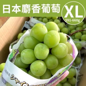 [甜露露]日本麝香葡萄XL(591-660g串)